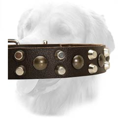 Golden Retriever Collar With Studs And Pyramids