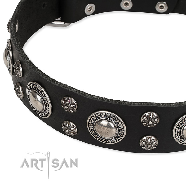 Daily use studded dog collar of finest quality full grain genuine leather