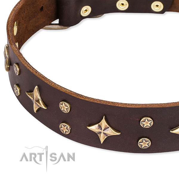 Comfy wearing adorned dog collar of top notch leather