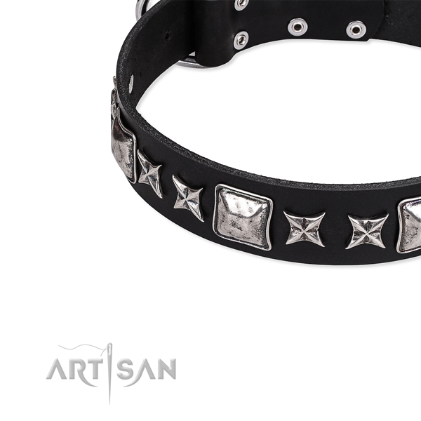 Everyday use studded dog collar of high quality full grain leather