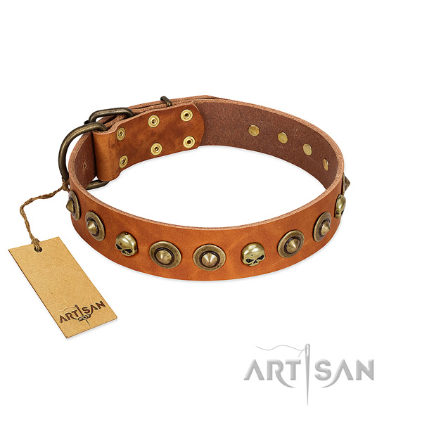 Full grain natural leather collar with stylish adornments for your doggie