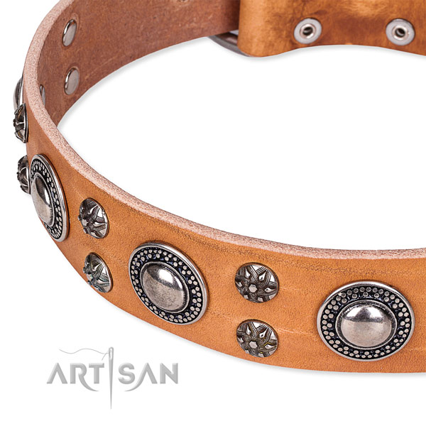 Daily use adorned dog collar of finest quality full grain genuine leather