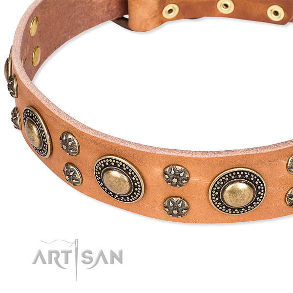 Everyday walking decorated dog collar of quality full grain leather