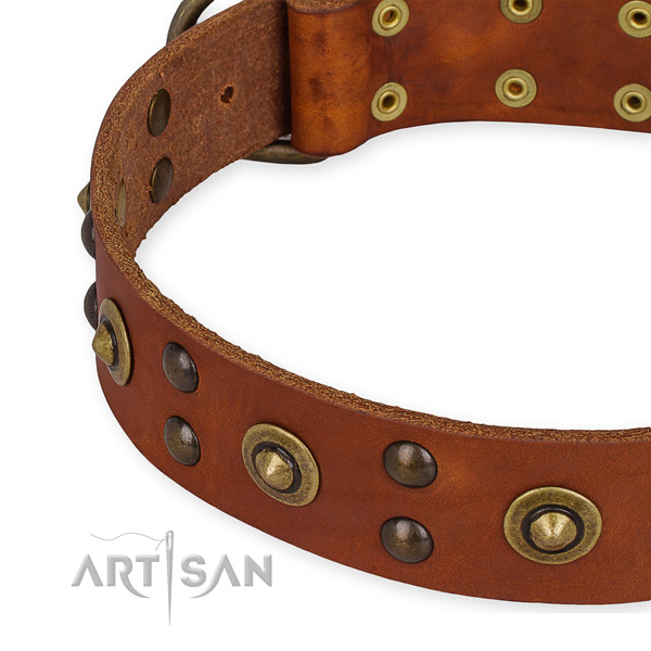 Full grain natural leather collar with reliable traditional buckle for your impressive four-legged friend