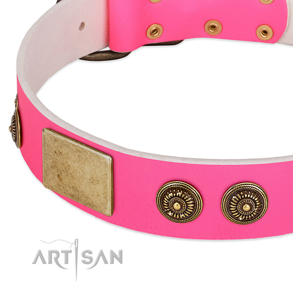 Extraordinary dog collar made for your beautiful canine