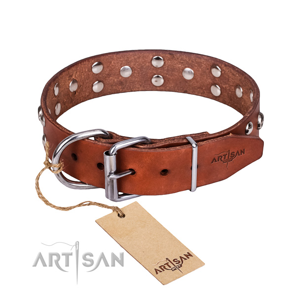 Daily use dog collar of finest quality genuine leather with studs