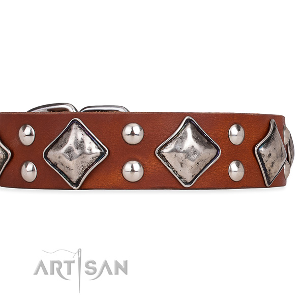 Full grain natural leather dog collar with awesome corrosion resistant adornments