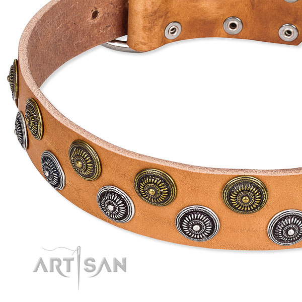 Daily walking adorned dog collar of best quality full grain genuine leather