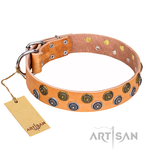 Handy use dog collar of durable full grain natural leather with studs