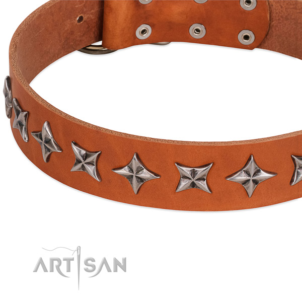 Everyday use studded dog collar of reliable natural leather