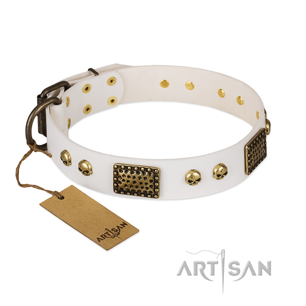 Reliable fittings on everyday walking dog collar