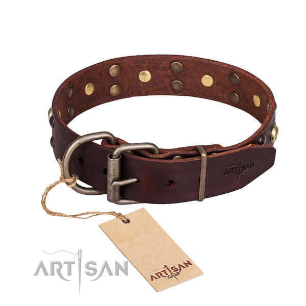 Fancy walking studded dog collar of high quality full grain leather