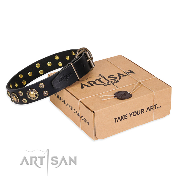 Daily walking dog collar of quality full grain natural leather with decorations