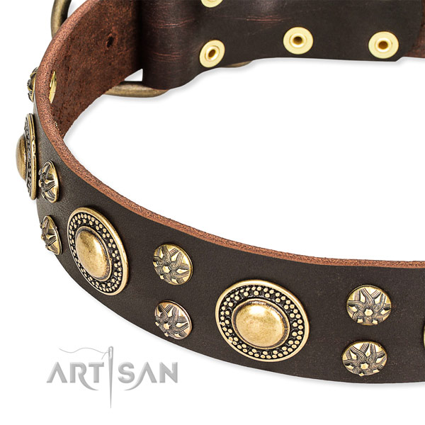 Everyday use studded dog collar of quality full grain genuine leather