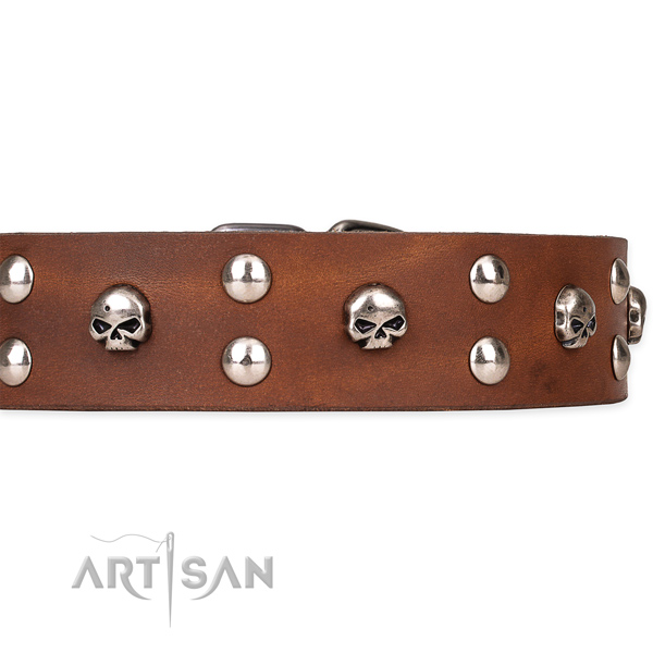 Daily walking adorned dog collar of finest quality genuine leather