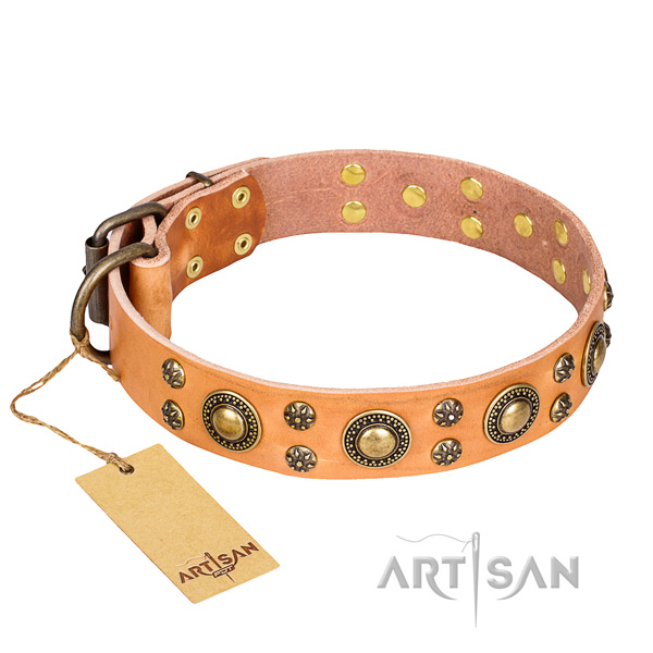Walking dog collar of top notch full grain leather with adornments