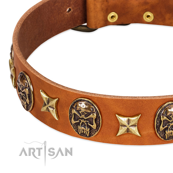 Rust resistant adornments on full grain leather dog collar for your pet