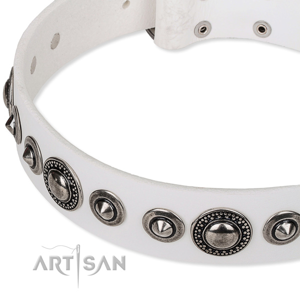 Fancy walking studded dog collar of finest quality full grain natural leather