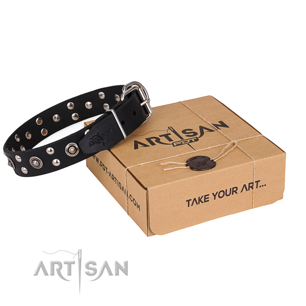 Everyday walking dog collar with Unique reliable adornments