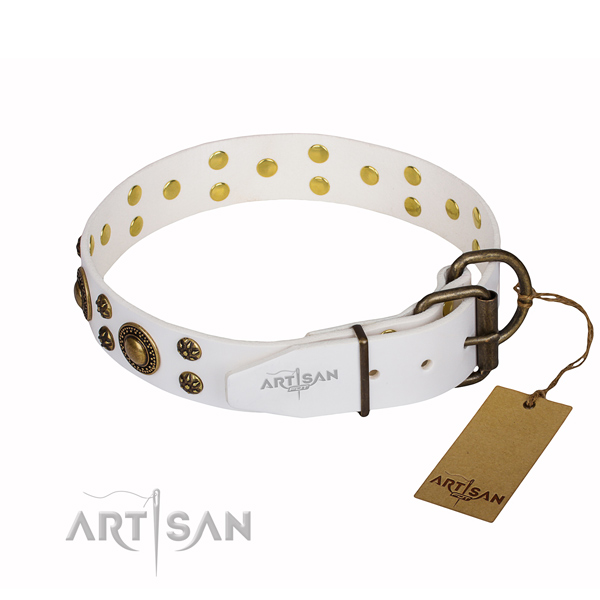 Walking embellished dog collar of high quality full grain leather