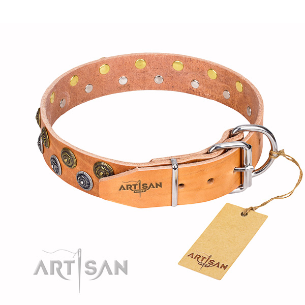 Stylish walking studded dog collar of strong natural leather