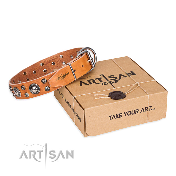 Everyday walking dog collar of high quality leather with adornments