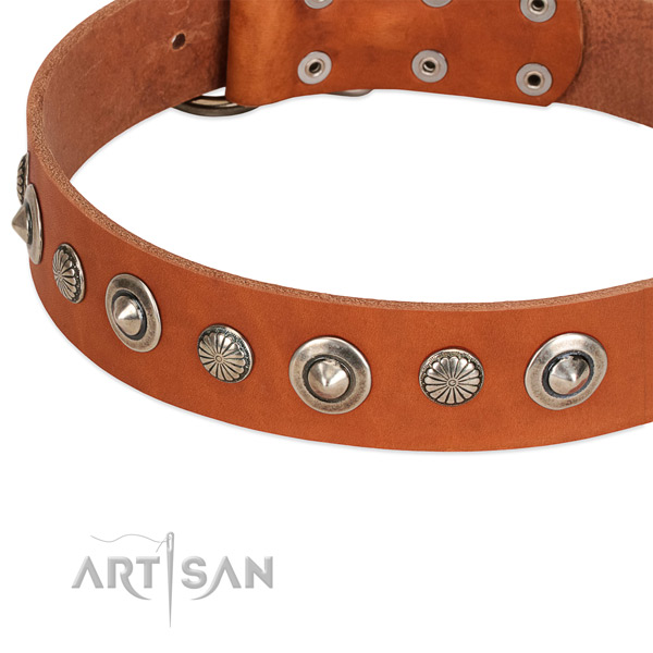 Natural leather collar with corrosion resistant hardware for your stylish dog