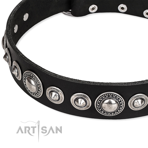 Everyday walking studded dog collar of strong full grain genuine leather
