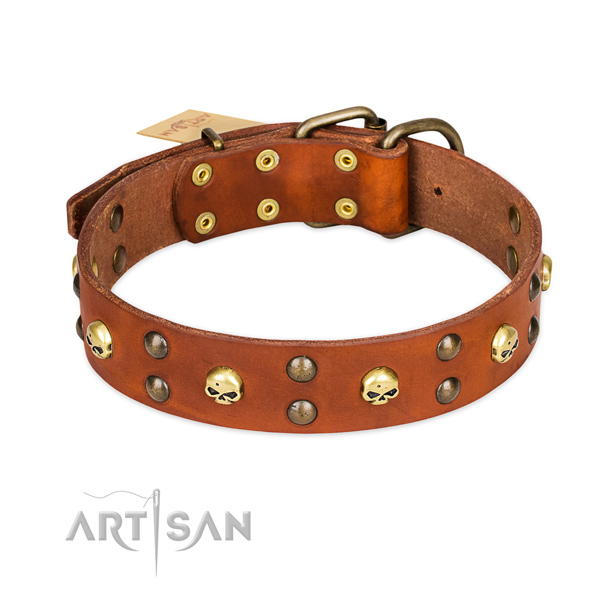 Everyday use dog collar of reliable leather with decorations