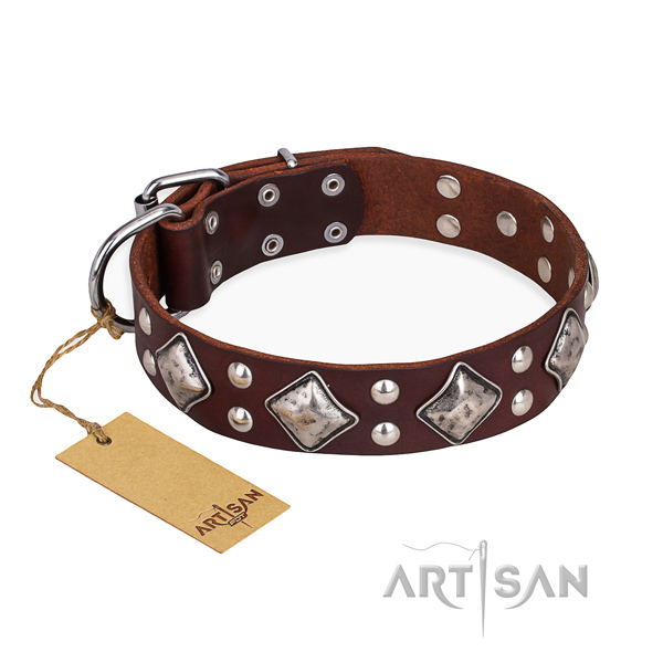 Fancy walking adorned dog collar with durable fittings