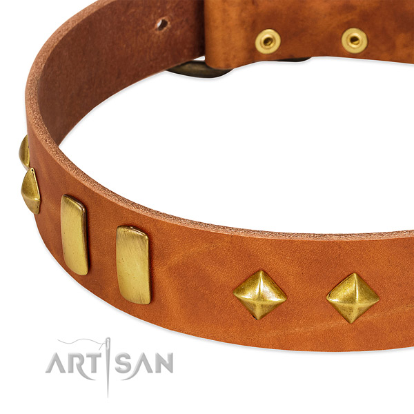 Daily use full grain leather dog collar with top notch embellishments
