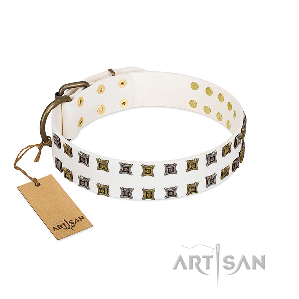 Leather collar with awesome studs for your dog