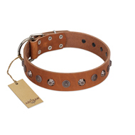"""Silver Age"" Fashionable FDT Artisan Tan Leather Golden Retriever Collar with Silver-Like Studs"