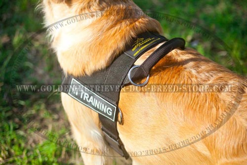 Convenient Handle on Nylon Dog Harness