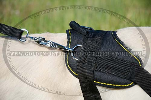 Strong D-Ring on Golden Retriever Harness