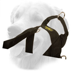Control Handle on Golden Retriever Harness