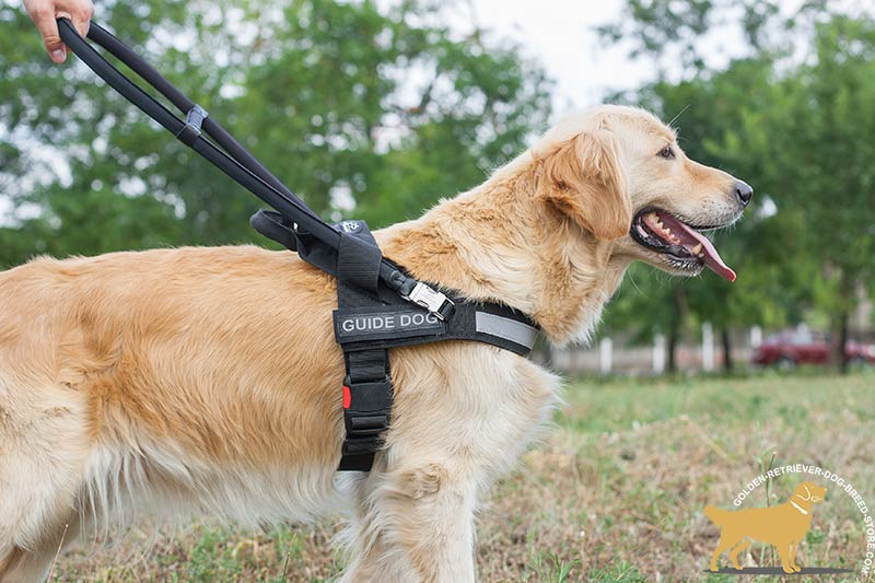 Ergonomic Design Golden Retriever Harness