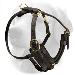 Stylish Leather Harness for Sporty Dogs