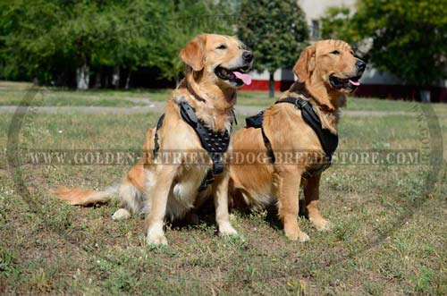 Fashionable Leather Harness for Active Dogs