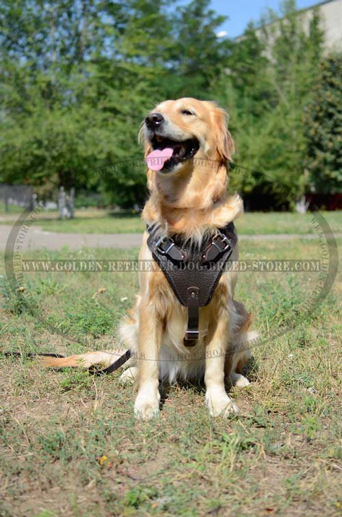 Extra Comfortable Harness for Golden Retrievers