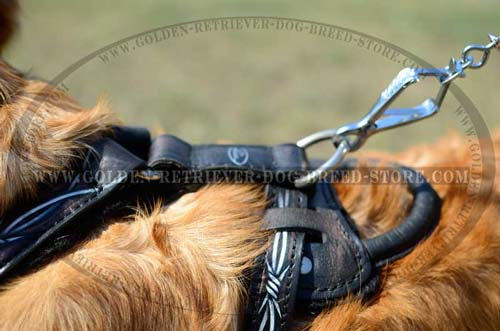Harness for Active Dogs