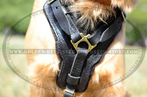 Leather Harness for Sporty Dogs
