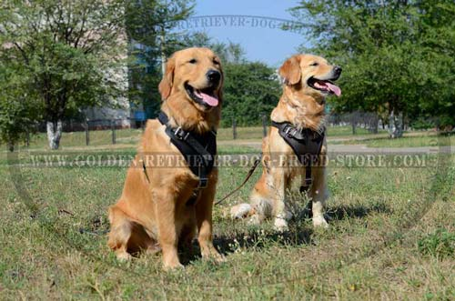 Golden Retriever Extra Comfortable Harness