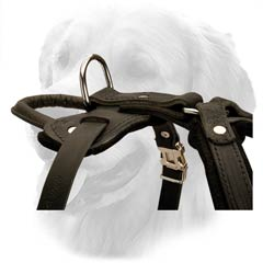Leather Harness with Wide Straps