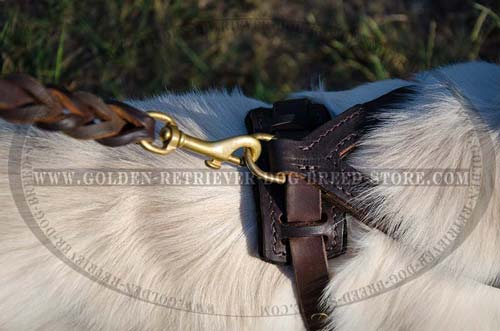 Leather Harness with Leash Attached