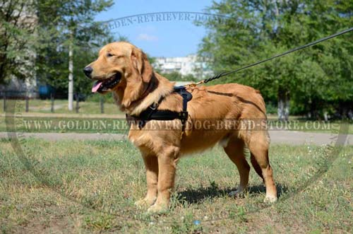 Durable Extra Strong Leather Harness