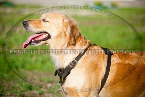 Comfortable Padded Chest Leather Harness