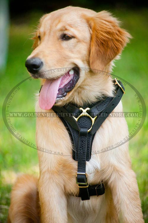 Leather Harness for Active Dogs
