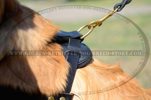 Golden Retriever Durable Leather Harness