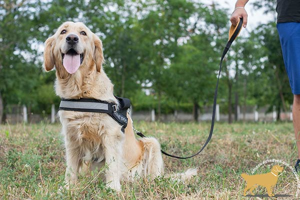 Golden Retriever Harness with 2 Ply Wide Front Strap